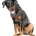 match_show_dog_force_one_3448_ok_web